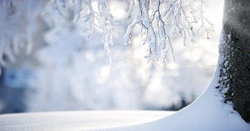 SAFE SNOW REMOVAL: PROTECT YOUR LANDSCAPE AND YOURSELF